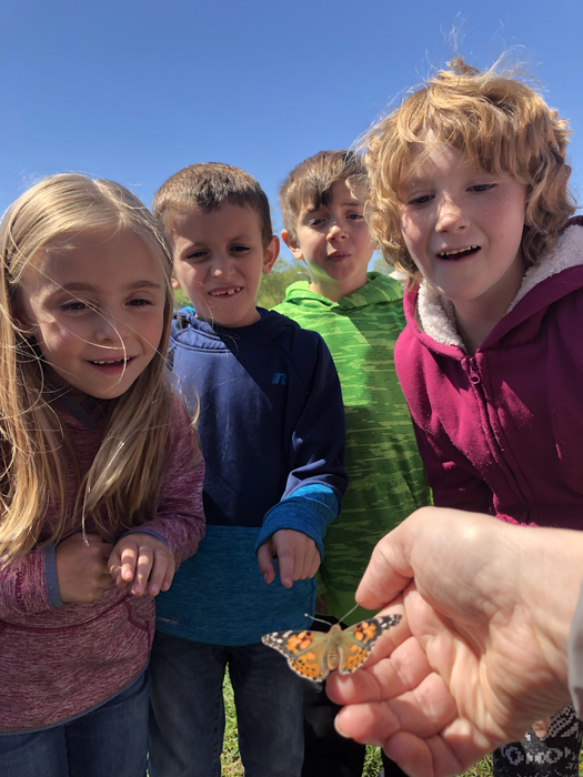 First grade butterfly release day